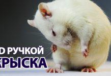 Крыса 3D ручкой